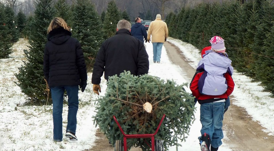 New Jersey Christmas Tree Growers Association – Real Christmas Trees ...